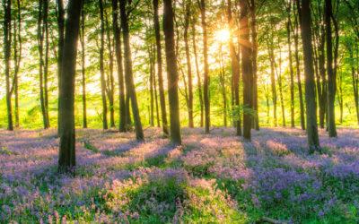 Terence Mckenna y la resurrección de la Luz