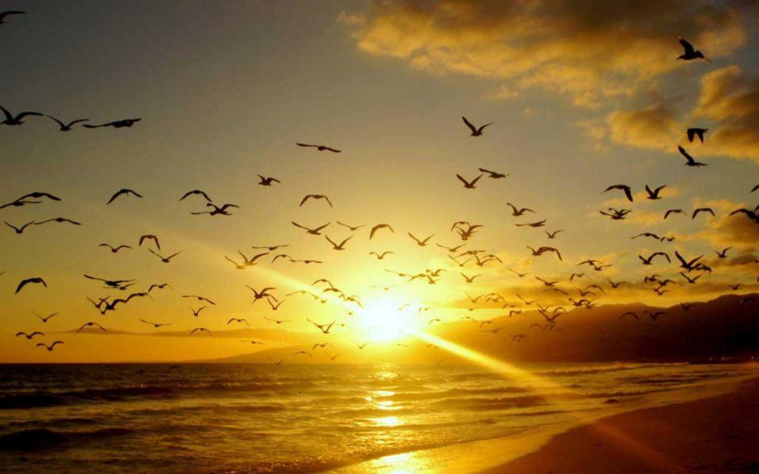 Sanación con luz solar o sungazing